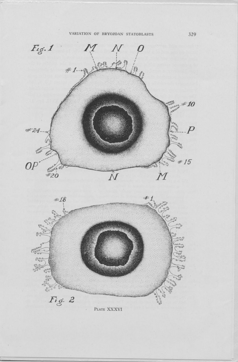 On the variation of statoblasts of Lophopodella carteri page 4